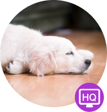 Pet Monitor VIGI App: Dog Camera for iPhone, iPad, iPod